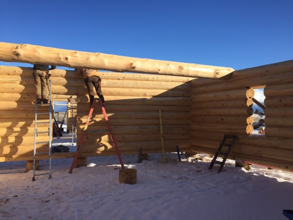 Step ladders and extension ladders are used on the lower courses of a handcrafted log shell, but as the walls rise scaffolding is put in place.